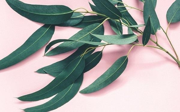 درمان گیاهی ارتروز زانو